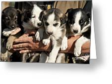 Alaskan Huskey Puppies Greeting Card by John Greim