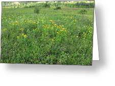 Alberta Summer Meadow Greeting Card