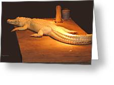 Albino Alligator Greeting Card