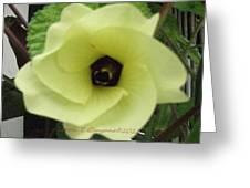Alcea  Greeting Card