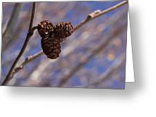 Alder Cones Greeting Card