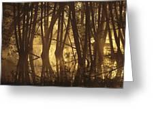 Alder Tree Marshland At Sunrise Greeting Card
