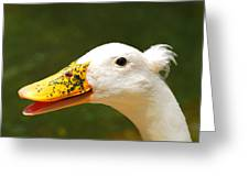 Alfalfa The Duck Greeting Card