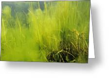 Algae Greeting Card