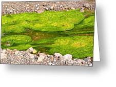 Algae Bloom Natural Abstract Art Of Nature Greeting Card