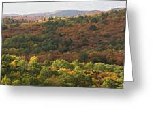 Algonquin In Autumn Greeting Card