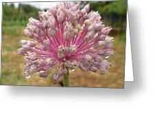 Alium Flower After Rain Greeting Card
