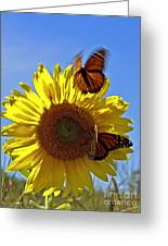 All A Flutter Greeting Card