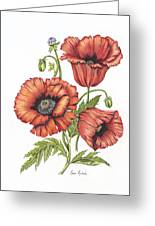 All About Poppies Greeting Card