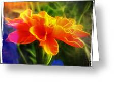 All Aglow Greeting Card