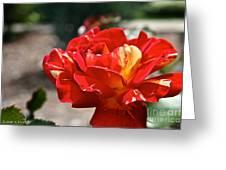 All American Magic Rose Greeting Card