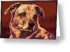 All American Mutt 2 Greeting Card