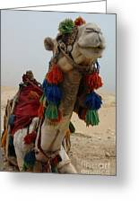 Camel Fashion Greeting Card