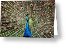 All Eyes On You Greeting Card