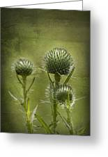 All Prickles And Stings Greeting Card