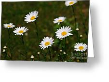 All The Dasies Greeting Card