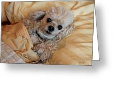 All Tucked In Greeting Card