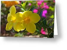 Allamanda  Greeting Card