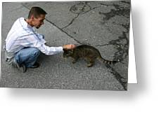 Alley Cat Greeting Greeting Card