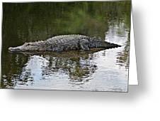 Alligator 1 Greeting Card