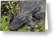 Alligator Alley Friend  Greeting Card