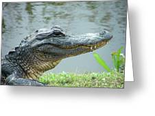 Alligator Cameron Prairie Nwr La Greeting Card