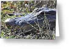 Alligator Two Greeting Card