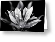 Allium Mono Greeting Card