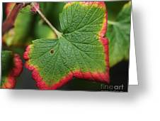 Almost Autumn Greeting Card