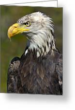 Almost There - Bald Eagle Greeting Card