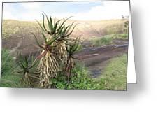 Aloe Aloe  Greeting Card