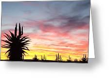 Aloe Ferox  South Africa Greeting Card