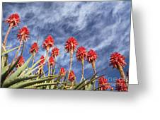Aloes South Africa Greeting Card