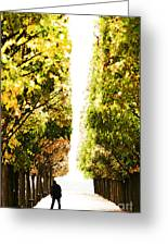 Alone In A Parisian Park Greeting Card