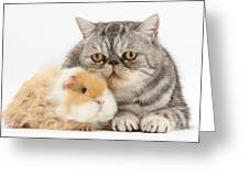 Alpaca Guinea Pig And Silver Tabby Cat Greeting Card