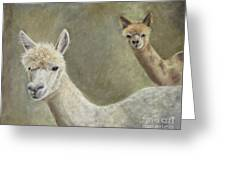 Alpacas Greeting Card