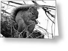 Alpha Squirrel  Greeting Card