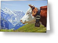 Alpine Cow Greeting Card by Greg Stechishin