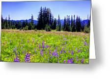 Alpine Meadow V At Mount Rainier Greeting Card