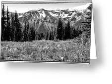 Alpine Meadow Viii At Mount Rainier Greeting Card