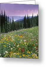 Alpine Wildflower Meadow, Mount Greeting Card