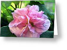 Althea Rose Of Sharon Greeting Card