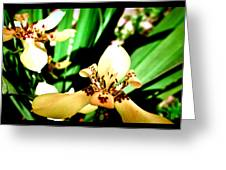 Always Orchids Greeting Card