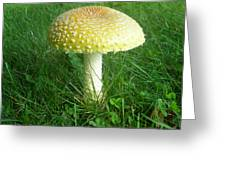 Amanita Muscaria - Guessowii Mushroom Greeting Card