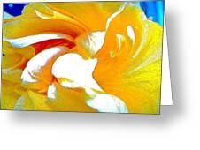 Amarulo Greeting Card