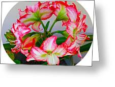 Amaryillis Flower Ring Greeting Card