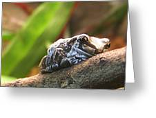Amazon Milk Frog Greeting Card