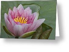 Amazon Water Lily Victoria Amazonica Greeting Card