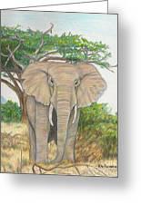 Amboseli Elephant Greeting Card