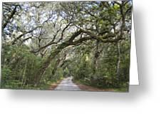 Amelia's Canopy Greeting Card